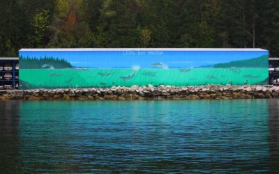 Celebrating the Dolphins Return to Howe Sound