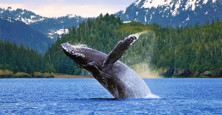 The Return of the Humpback Whales Feb 08-2019
